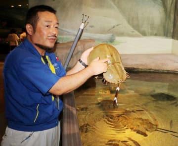 宮島水族館で保護したカブトガニを説明する三浦和伸さん