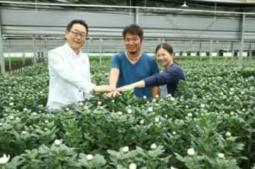 輪ギクを生産するハウスで手を重ねるJICAの越川和彦副理事長(左)と、お花屋さんぶんご清川の鈴木教仁専務(中)、恵取締役