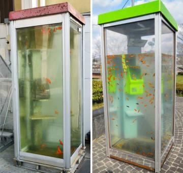 奈良県大和郡山市の柳町商店街に設置されていた電話ボックス内で金魚が泳ぐオブジェ(左)と、山本伸樹さんの作品(右、本人提供)