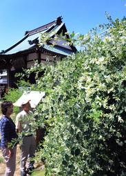 境内を爽やかに染めるシロハギ=神戸市須磨区妙法寺