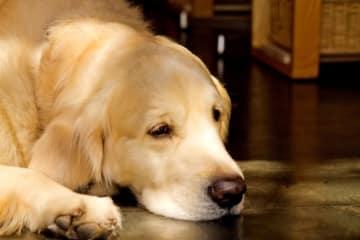 犬だけど『猫舌』の子がいる? 犬も『虫歯』になる?
