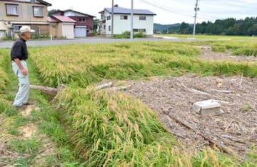 無念…最上地域で稲刈り断念 大雨被害で流木やごみ、冠水で病気