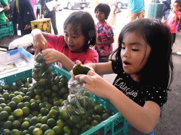 袋いっぱいにシークヮーサーを詰め込む子どもたち=22日、名護市・JAファーマーズマーケットやんばる「はい菜!やんばる市場」