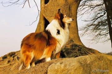 犬も長寿になるにしたがい、シニア犬が増えてきています。いつかはやって来るシニア期を、少しでも元気に、快適に過ごさせてあげたいもの。そのために気配りしてあげたいこともあります。
