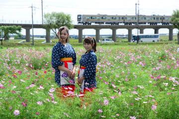 コスモス畑の中でミスあやめの撮影会も行われた。後方に電車が走り、より風情を醸し出す=23日、香取市