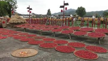 秋を彩る農家の天日干し「晒秋」 安徽省黄山市
