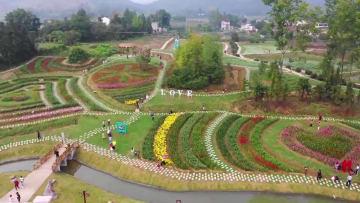 満月に咲くユリの花  安徽省銅陵市