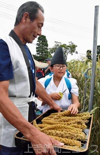 伝統衣装で皇室献上のアワ収穫 前橋・宮城地区で献穀抜穂祭