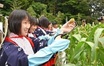 桂川町で献上米抜穂式 11月新嘗祭「平成最後の年、光栄」 [福岡県]