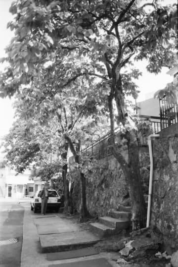 熱線を浴びて焦げた跡を残すカキの木=長崎市若草町