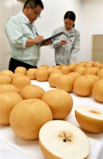 品評会でずらりと並んだジャンボナシ「新高」=荒尾市