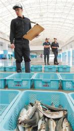 試験操業で水揚げした魚種などを確認する相馬双葉漁協の職員=20日午前8時55分ごろ