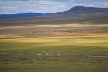 黄金色に輝くウラガイ草原 内モンゴル自治区
