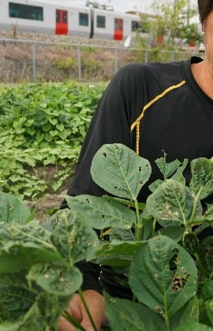 JR線路除草剤で沿線農作物被害 早場米の出荷自粛も、みやま市 今夏猛暑で揮発、飛散か