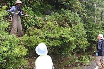【キイジョウロウホトトギスの周囲に生えた草を刈る会員(25日、和歌山県古座川町相瀬で)】