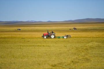 草原で牧草刈り 内モンゴル自治区