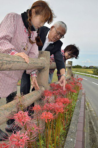 鹿児島県さつま町から贈られたヒガンバナに手を伸ばす相川町長(中)と瀬戸さん(左)ら