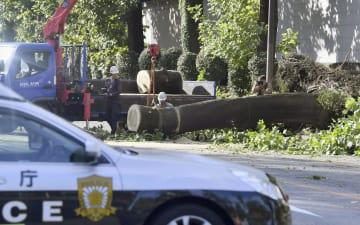 路上に倒れた木を片付ける作業員=1日午前7時55分、東京都港区