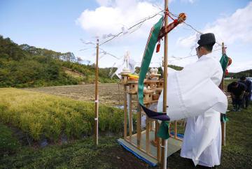 北海道厚真町の水田で行われた「抜穂祭」で、祝詞を読み上げる神職。奥は地震で崩れ、あらわになったままの山肌=2日午前