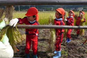 刈った稲のはせがけを体験する子どもたち