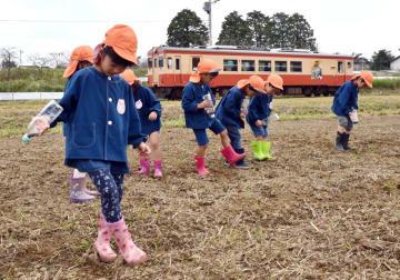 いすみ鉄道沿線の田んぼで、長靴で穴を掘って菜の花の種をまく園児=3日、いすみ市