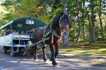 川湯温泉をのんびりと巡る無料の観光馬車