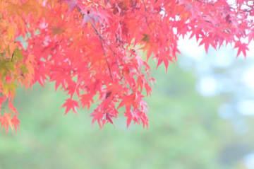 芸術の秋、スポーツの秋を堪能『城山もみじまつり』@相模原市緑区