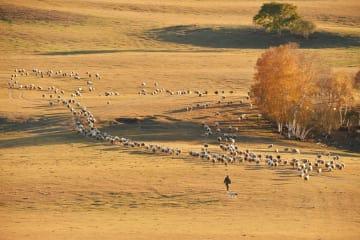 絵画のような秋の景色 内モンゴル自治区