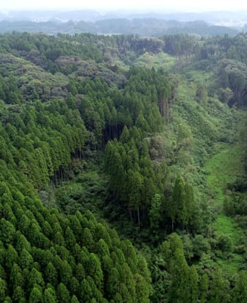 宮崎市高岡町の山林。一部のスギが無断で伐採されたとして、同市内の80代の女性と家族が告訴に踏み切った=9月(ドローンで撮影)