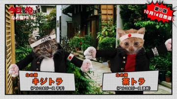 連続ドラマ「今日から俺は!!」のPR動画に登場する「なめ猫」