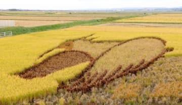 羽ばたくトキなどを稲の葉で表現した放鳥10周年記念の「田んぼアート」=佐渡市新穂青木