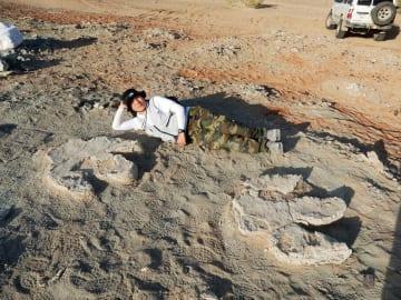 モンゴルのゴビ砂漠で発見された、大型鳥脚類恐竜のものとみられる幅約85センチの足跡化石(岡山理科大―モンゴル共同調査隊提供)