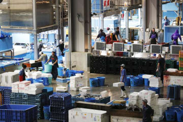開場した豊洲市場で、魚を扱う関係者=11日未明、東京都江東区