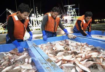 宮城県石巻市で漁師として働くインドネシア人の技能実習性=9月
