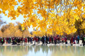 黄金色に染まった秋の胡楊林 内モンゴル自治区