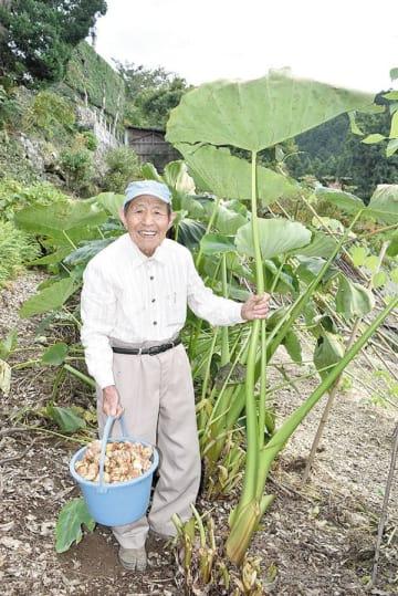 田島康八さんの自宅前の畑で大きく成長したサトイモ=皆野町三沢