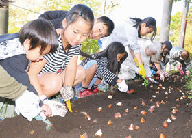 チューリップの球根に土をかぶせる中島民和会の子どもたち
