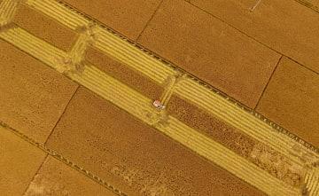 秋の収穫期迎えた河北省の水田