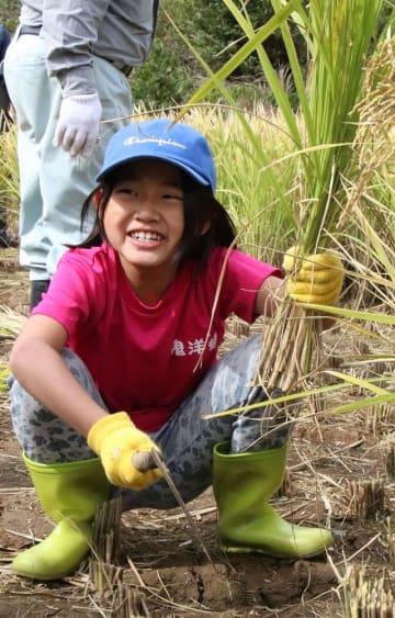 棚田の稲刈り体験に笑顔を見せる子ども=平戸市春日町