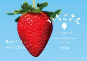 佐賀県が県内では20年ぶりに開発したイチゴの新品種「いちごさん」(画像:佐賀県の発表資料より)