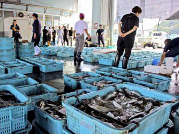 府内の定置網漁で取れた魚介類(舞鶴市上安久・府漁協舞鶴地方卸売市場)