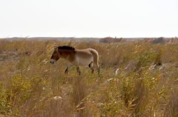 敦煌西湖国家級自然保護区を訪ねて 甘粛省敦煌