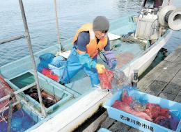 マダコを水揚げする漁師