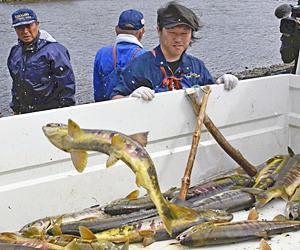 一匹も無駄にしない!伝統のサケ漁「合わせ網漁」 楢葉・木戸川