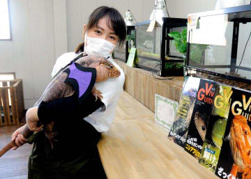 約20種の爬虫類を観賞できるカフェ。店長の藤掛さんに抱かれたレッドテグーはハロウィーンのおめかし中