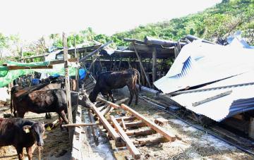 台風24号の暴風で半壊した牛舎=16日、南城市佐敷小谷