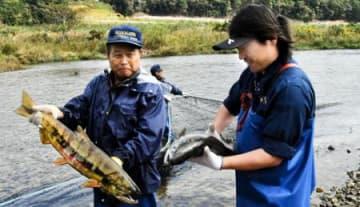 伝統「合わせ網漁」公開 楢葉・木戸川のサケ漁が本格化