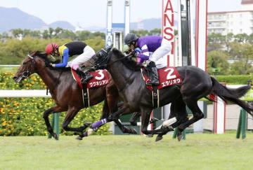 神戸新聞杯で2着に入ったエタリオウ(右)=9月23日、阪神競馬場