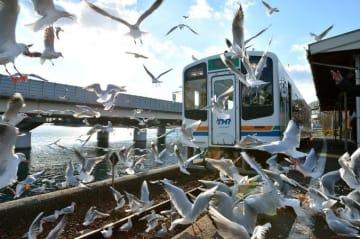 食に芸術、絶景も!天浜線に乗って秋を満喫する贅沢列車旅