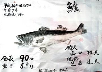 山口さんのスズキ魚拓